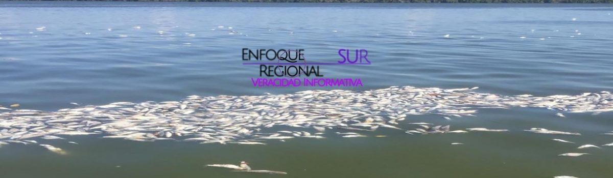 COEPRISS recomienda no consumir peces que aparecen muertos en la bahía de Teacapán
