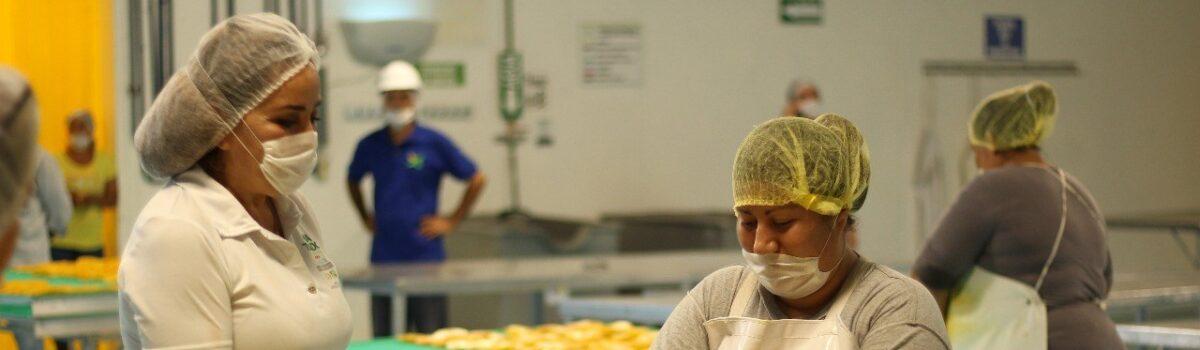 Rosario y Escuinapa llamados a ser un potencial de exportación en fruticultura